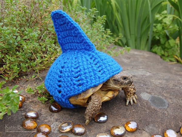 tortoise1