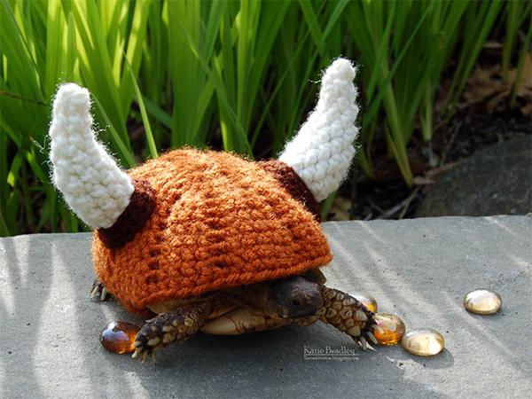 tortoise10