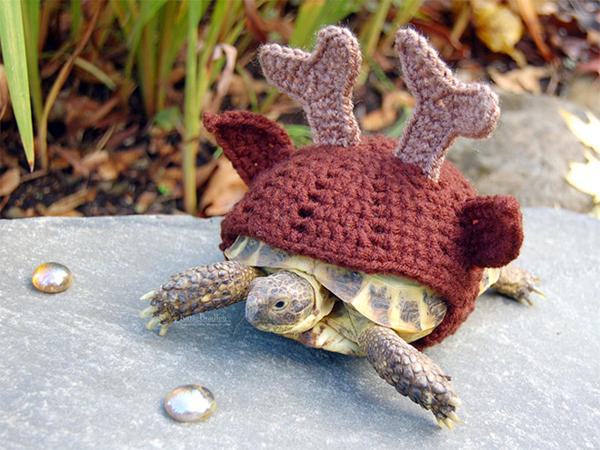 tortoise11
