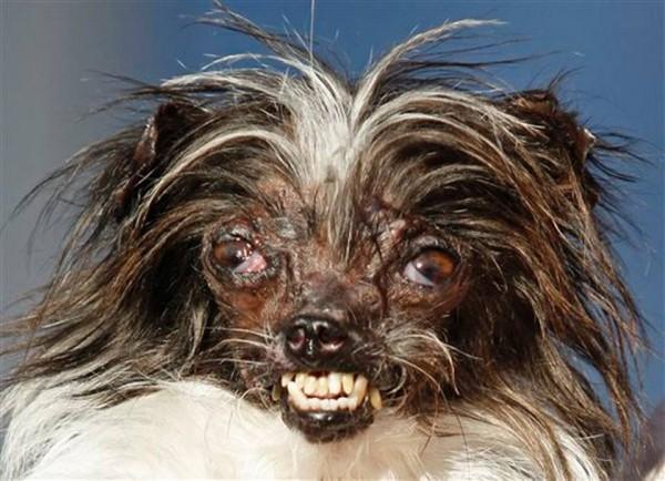 APTOPIX_World_s_Ugliest_Dog__mschulte@kcstar.com_1