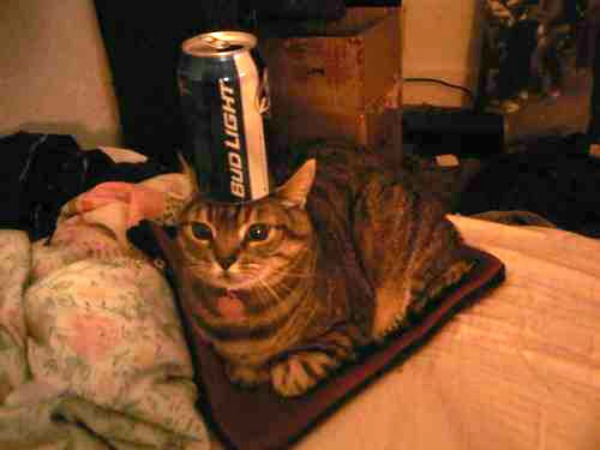 useful_cat