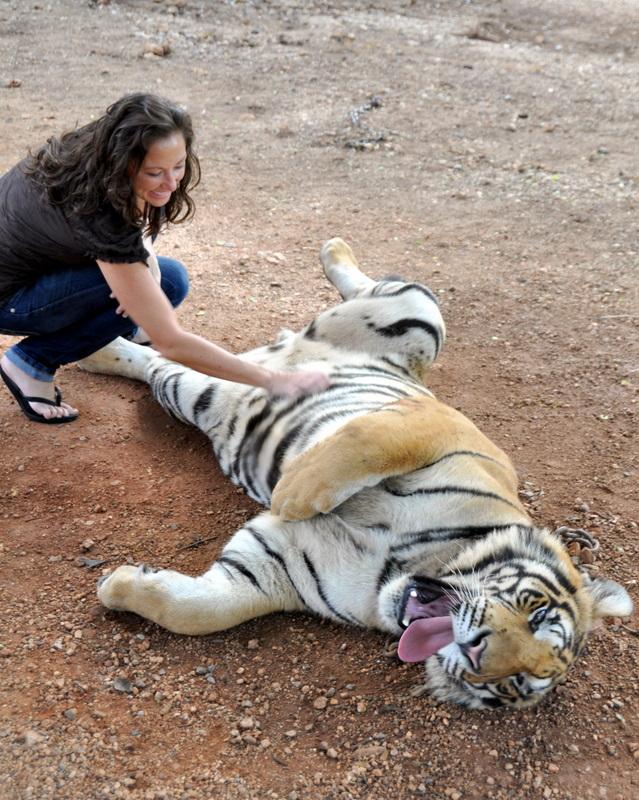 calin-tigre