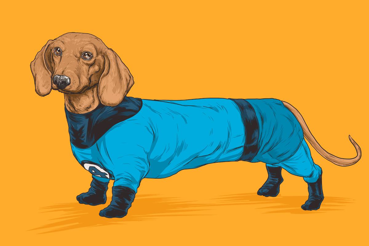 chien-super-heros-8