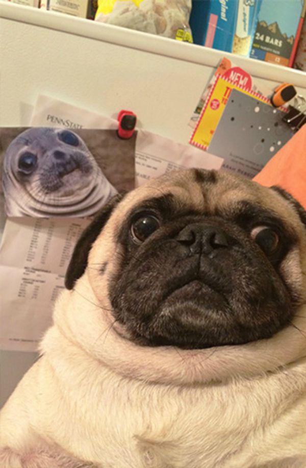 dog-selfie8 (1)