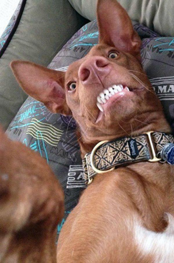 dog-selfie8