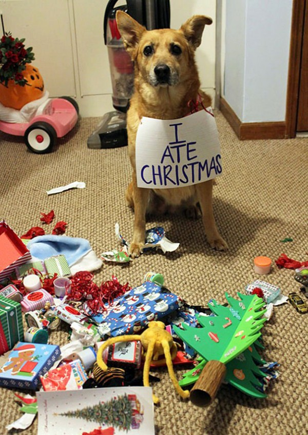 chien-sapin