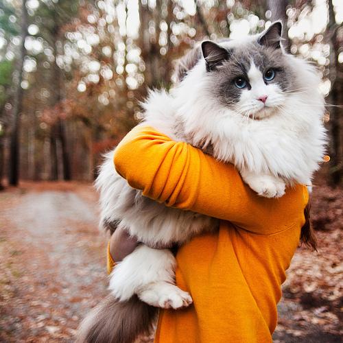 chat-soyeux