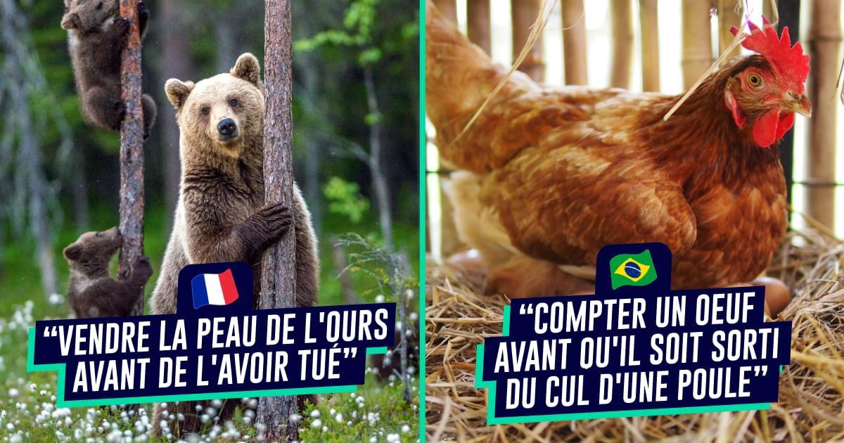 Top 10 des façons de vendre la peau de l'ours avant de l'avoir tué dans d'autres langues