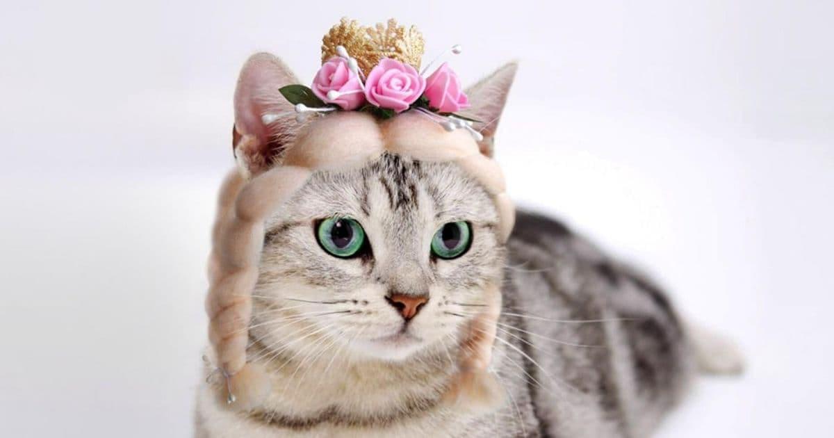 Une perruque de princesse pour les chats qui se la racontent