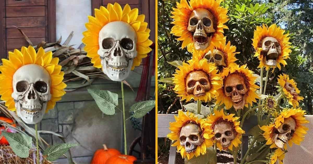 Des tournesols têtes de mort d'Halloween, la meilleure décoration qui existe pour ton jardin